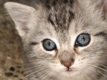 животные - кошки - кошка