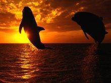 животные - дельфины - дельфин, закат, море, прыжок