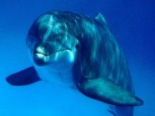 животные - дельфины