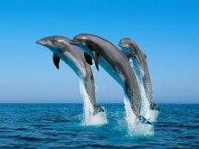 животные - дельфины - дельфины, море, прыжок