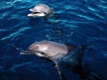 животные - дельфины - дельфин